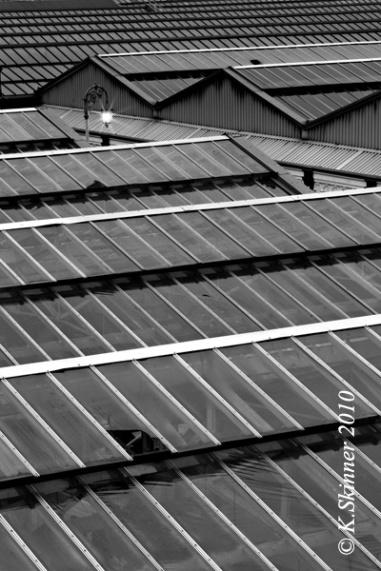 Waverley Rooftops